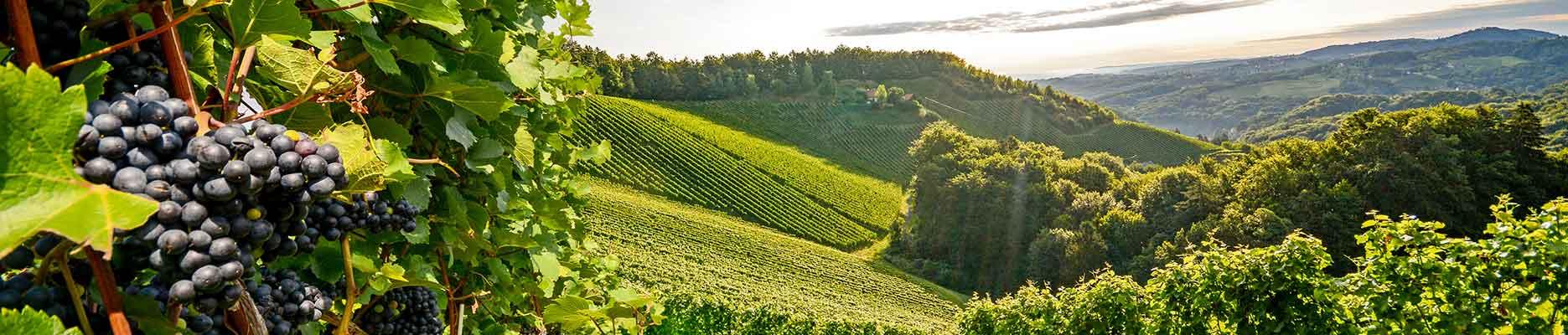 Wein Spezialitäten piemont liemonte, Castrop-Rauxel